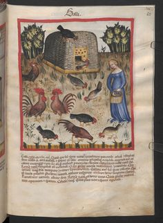 Folio 65r (page 133). Tacuinum sanitatis, Codex Vindobonensis, series nova 2644. Northern Italy, probably Verona, 1380-1399.