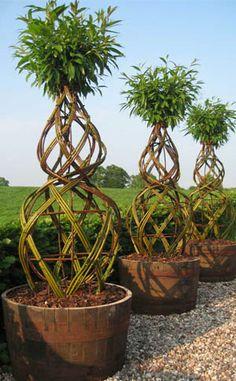 Living sculptures from willows Container Plants, Container Gardening, Landscape Design, Garden Design, Living Willow, Garden Structures, Trees And Shrubs, Dream Garden, Horticulture