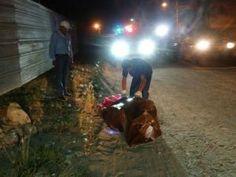 Encuentran a otro cuerpo empaquetado en San Pedro Sula