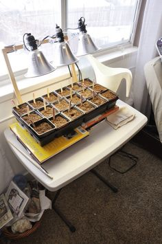 5 Biggest Mistakes Begginers Make When Starting Seeds Indoors