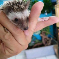 Rare Animals, Cute Baby Animals, Animals And Pets, Funny Animals, Strange Animals, Pet 1, Pet Rats, Reptiles, Mammals
