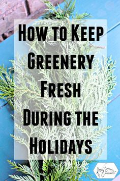 How to Keep Greenery Fresh During the Holidays FrySauceandGrits.com