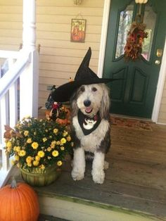 Find this Pin and more on Old English Sheep Dog.