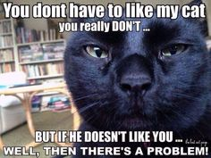 This looks like my cat Zephyr...judging the heck out of you!