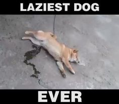 Maybe the laziest creature