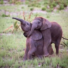 Playful tender moments...