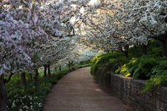 Photo: Flowering trees at Chicago botanical garden Paradise Places, Amazing Nature Photos, Chicago Botanic Garden, Spring Pictures, Spring Pics, Spring Tree, Spring Flowers, Spring Landscape, Garden Photos