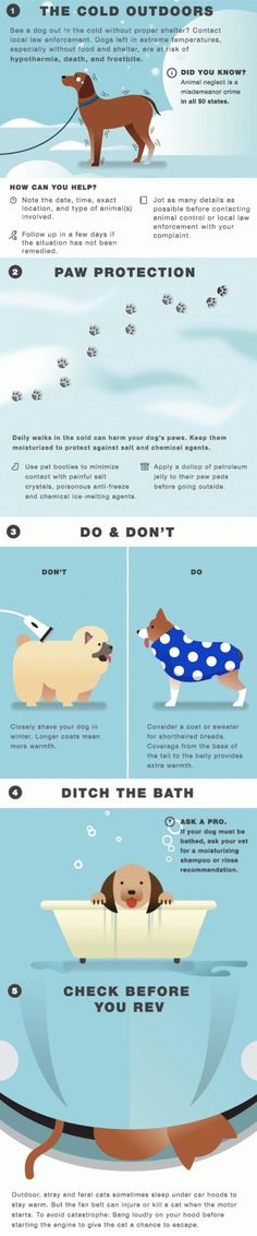 Here's how you can keep your animal buddies warm this Winter.