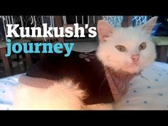 The Epic Journey of a Refugee Cat to Find His Family
