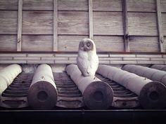 屋根上にフクロウが鎮座しています。 福を呼ぶ、不苦労ということで、招福の願いが込められています。