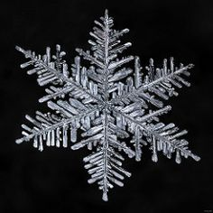How to Photograph Snowflakes with a DSLR : By Don Komarechka The winter months are typically uninteresting for macro photographers. Snowflake Photography, Snowflake Pictures, Macro Photographers, Fractal, Fotografia Macro, Digital Photography School, Portraits, My Images, Snow Images