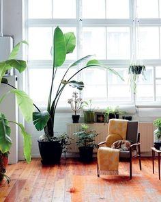 大物の〈オーガスター)の鉢だけでも絵になりますが、小さな植物も取り入れることで、豊かな自然を感じることができます。 さり気なく吊り下げた鉢もいい味を出しています。