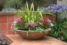 For the wok planters around my pool...