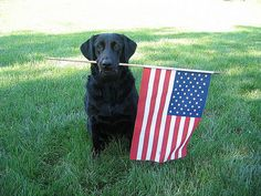 Cassie with her #American flag!