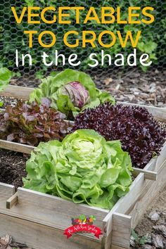 shade garden Not enough sun for the hours of recommended sunlight for a vegetable garden No worries. There are many vegetables that grow well in shade and part sun. Find the full list of shade-loving vegetables. Fall Vegetables, Planting Vegetables, Growing Vegetables, Growing Tomatoes, Square Foot Gardening, Organic Gardening Tips, Organic Farming, Organic Compost, Large Plants