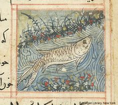 Bestiary, MS M.500 fol. 80r - Images from Medieval and Renaissance Manuscripts - The Morgan Library & Museum
