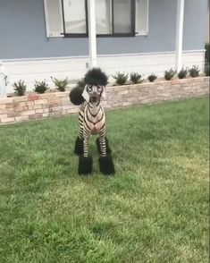 Cute Funny Dogs, Cute Funny Animals, Cute Animal Videos, Funny Animal Pictures, Zebra Costume, Animal Antics, Cute Little Animals, Zebras, Animals Beautiful