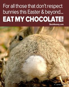Simple Easter message... to all those that don't respect bunnies! www.best4bunny.com