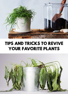 Houseplants are amazing! They make your house prettier and are great for cleaning up the air. Find out Tips And Tricks To Revive Your Favorite Plants