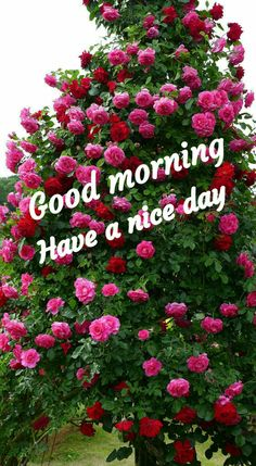 Good Morning Clips, Good Morning Tuesday, Good Morning Love, Good Morning Images, Good Morning Messages Friends, Good Morning Greetings, Good Morning Wishes, Good Morning Flowers Rose, Cute Happy Birthday