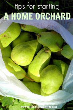Starting our home orchard - tips on stating and which varieties we chose | The Elliott Homestead