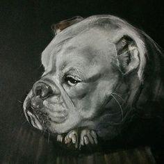298 - Loving the wrinkles. #panpastel #charcoal#animal_artists#creative_animalart#petportrait#artnerd#worldofpencils#drawanyway#creativempire#art_spotlight#artistdrop#artists_magazine#worldofartists#proartists#bestartdaily#willdrawteam##art_collective#sketch#sketchbook#arts_help#art_empire#instagramart#animaldrawing#animalartwork#animalcreatives#animalsofinstagram#dogsofinstagram#dogportrait#bulldog