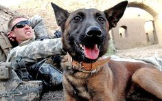 Soldier Dogs & the extraordinary relationship between military dogs and their handlers.
