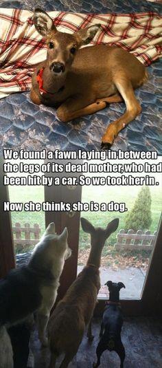 du tableau Animals Fawns