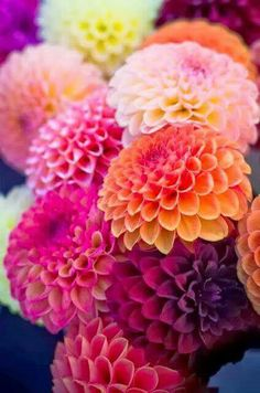 Beautiful Dahlias//   ❤❤♥For More You Can Follow On Insta @love_ushi OR Pinterest @ANAM SIDDIQUI ♥❤❤