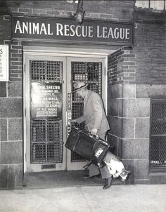 1940 : Cat escapes from the Animal Rescue League
