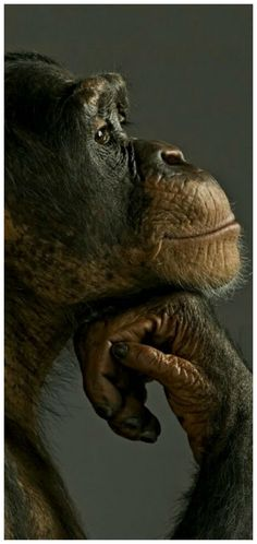 A compilation of colourful photos that are of interest to me. Nature Animals, Animals And Pets, Baby Animals, Funny Animals, Cute Animals, Wildlife Nature, Strange Animals, Wild Animals, Primates