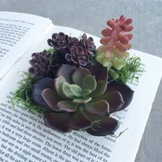 Book of Succulents. Succulent Planter. Book Planter. by WillowND