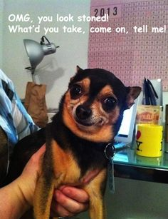 Funny dog pics | 04 2013 by giulia in dogs puppies tags animals dogs drugs face funny ...