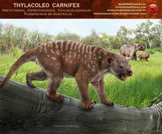 Thylacoleo carnifex by RomanYevseyev.deviantart.com on @deviantART
