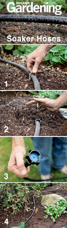 Soaker hoses are a great way to maintain the proper moisture for your plants, without wasting water. Checkout how to use them effectively in the garden @ Tutorial from Organic Gardening. Diy Garden, Lawn And Garden, Water Garden, Garden Plants, Garden Hose, Jardin Decor, Organic Gardening Tips, Organic Vegetables, Vegetable Garden