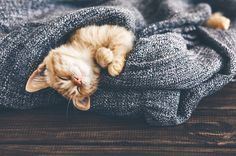 25 Adorable Kittens Stock Photos To Make You Happy: Total bliss