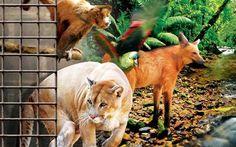 1º Mutirão Solidário pelos Animais
