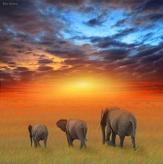 Elephants on the African Plain. Kenya | © Ben Heine.
