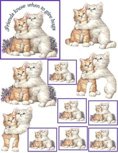 CATS - 3D friends know when to give hugs
