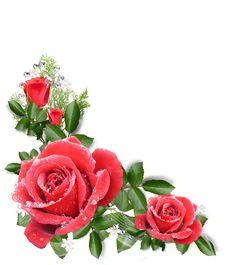imagenes  para decorar hojas blancas | Publicado por PazenlaTormenta - Judith Arias Sarmiento - en 17:35 Framed Wallpaper, Flower Background Wallpaper, Flower Backgrounds, Beautiful Flower Drawings, Beautiful Artwork, Beautiful Roses, Leaf Drawing, Rose Frame, Special Flowers
