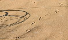 Sand and traces of birds. by Wonderful World on @creativemarket