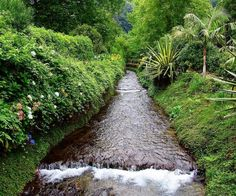 Poca Da Dona Beija, Furnas, São Miguel Island, Azores, Portugal ✯ ωнιмѕу ѕαη∂у The Beautiful Country, Beautiful Places, Different Shades Of Green, Spain And Portugal, Heaven On Earth, Cabo, Portuguese, Trip Planning, Places To See