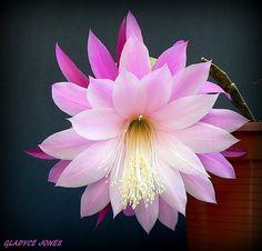 A top notch flower, large.