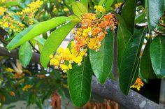 Interesting Facts About Honduras: Honduras Flora - Muelle de Cabotaje - La Ceiba, Honduras