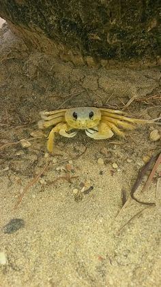 cangrejo-crab6