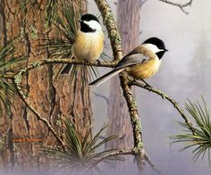 Highland Graphics Feathered Friends Coasters - Chickadees on Small Branch Small Birds, Little Birds, Love Birds, Beautiful Birds, Pet Birds, Colorful Pictures, Nature Pictures, Backyard Birds, Garden Birds