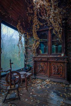 Wanneer de natuur een verlaten huis overneemt...Miss Sentinelli