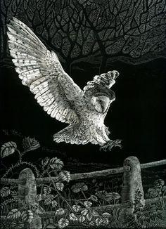 Barn Owl Landing by Kay Leverton (http://www.etsy.com/listing/92133604/fine-art-print-of-barn-owl-landing-from)