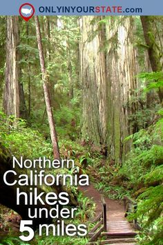 Travel | California | Attractions | Northern California | USA | Things To Do | Adventure | Hiking | Outdoors | Easy Hikes | Hikes Under 5 Miles | NorCal Hikes | State Parks | Forest | Getaway | Redwood National Park | Tall Trees | Trails | Waterfalls | Natural Beauty | Mountains