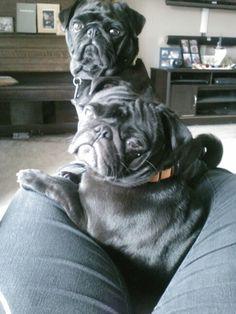 I'm a pug seat. (Paulie & Rocky)